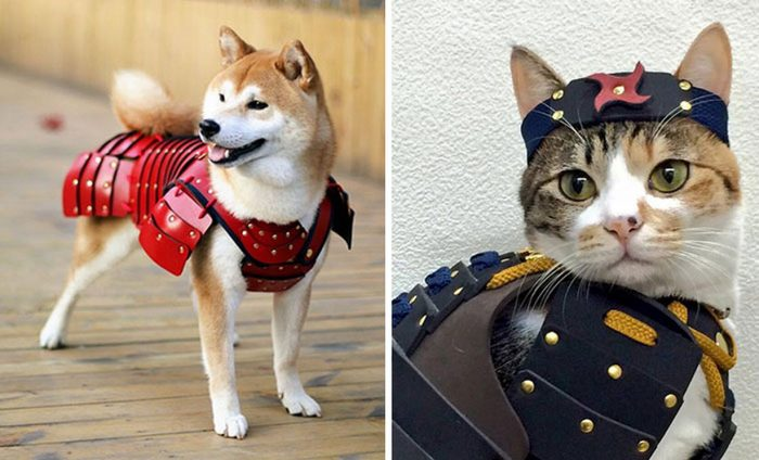 This Japanese Company Makes Samurai Armor for Cats and Dogs