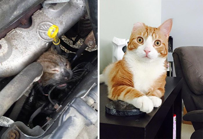12 Amazing Before & After Pics Showing How Rescue Can Change A Cat's Life