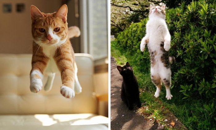 These Telekinetic Cats Mastered The Art Of Levitation