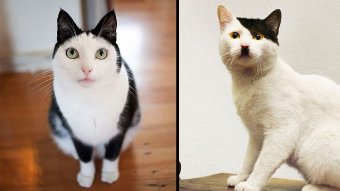 10 Cats With Very Unique Fur Markings
