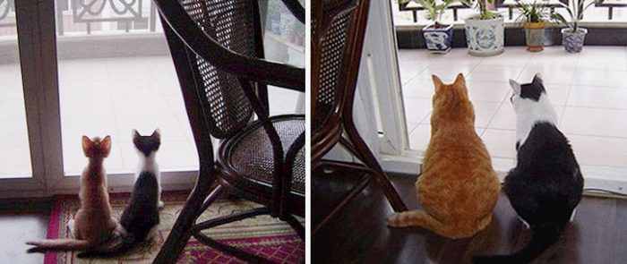 15 photos showing us how kittens grow up into handsome cats