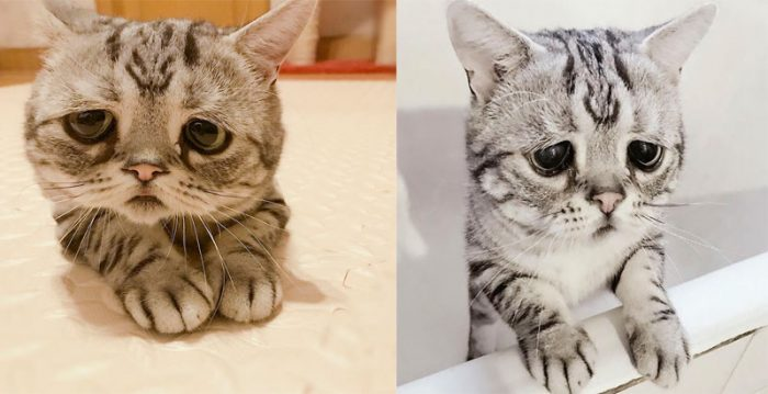 Meet Luhu, The Cat With The  Saddest Expression In The World