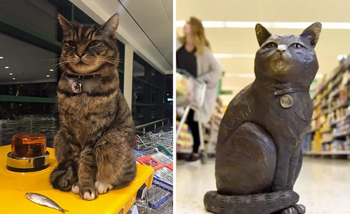 Brutus, The Famous Supermarket Cat Sadly Passed Away Earlier This Year So The Community Decided To Honor His Memory By Raising £4000 To Build A Bronze Statue Of Him