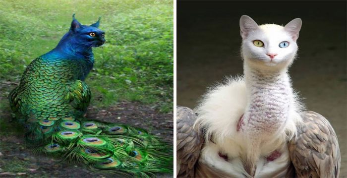 9 Unusual, Funny Cat And Bird Hybrids In Photoshop