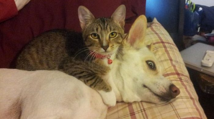 Cute And Funny Pictures Of Cats And Dogs Living Together