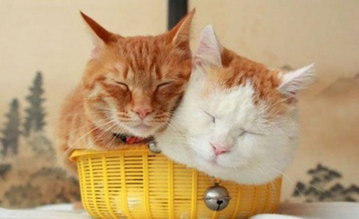 "10 Times Cats Said ""If It Fits, I Sits"" And Proved Themselves Right!"