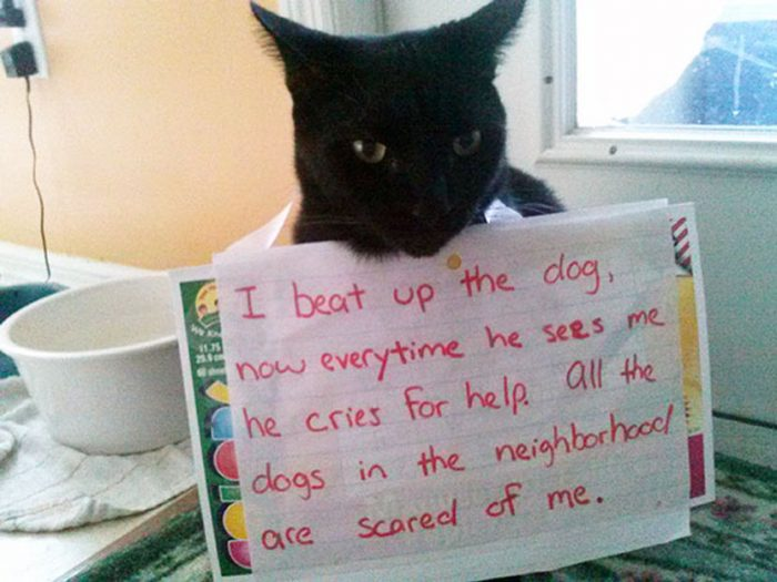 10 Funny Cats Being Shamed For Their Crimes