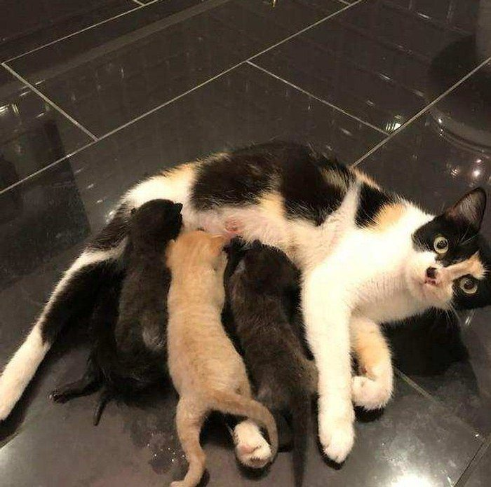 Houston Man Saves 3 Kittens from Hurricane and Goes Back to Find Their Mother…