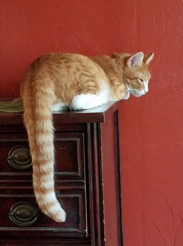 long live_10 Amazing Cats With The Longest Tails | Viral Cats Blog
