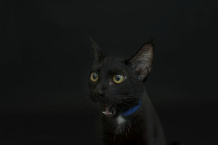 Photographer Takes Beautiful Pictures Of Black Cats For Halloween