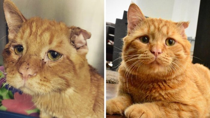 The Story Of BenBen, The 'Sad Face' Cat That Nobody Wanted
