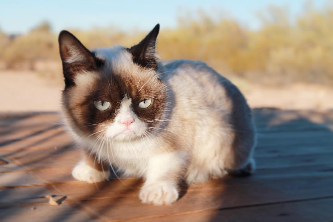 A List With Some Of The Most Famous Cats Of The Internet Viral - Garfi is officially the worlds angriest cat