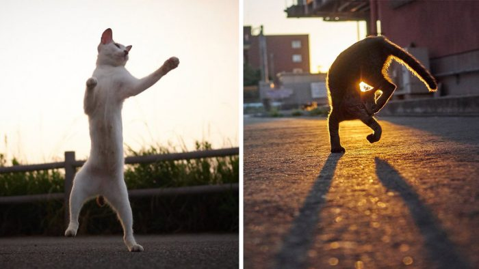 Japanese Photographer Does Purrfect Photos To Ninja Cats