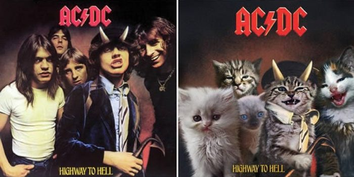 The Kitten Covers – Classic Album Covers Recreated Using Kittens