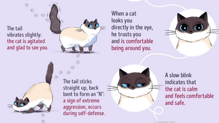 A Short Illustrated Guide To Help You Understand Cat Behaviour