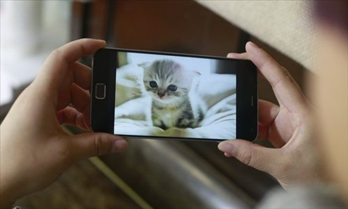 Study Suggests: Watching Cat Videos And Pictures Makes People Happy & Boosts Energy