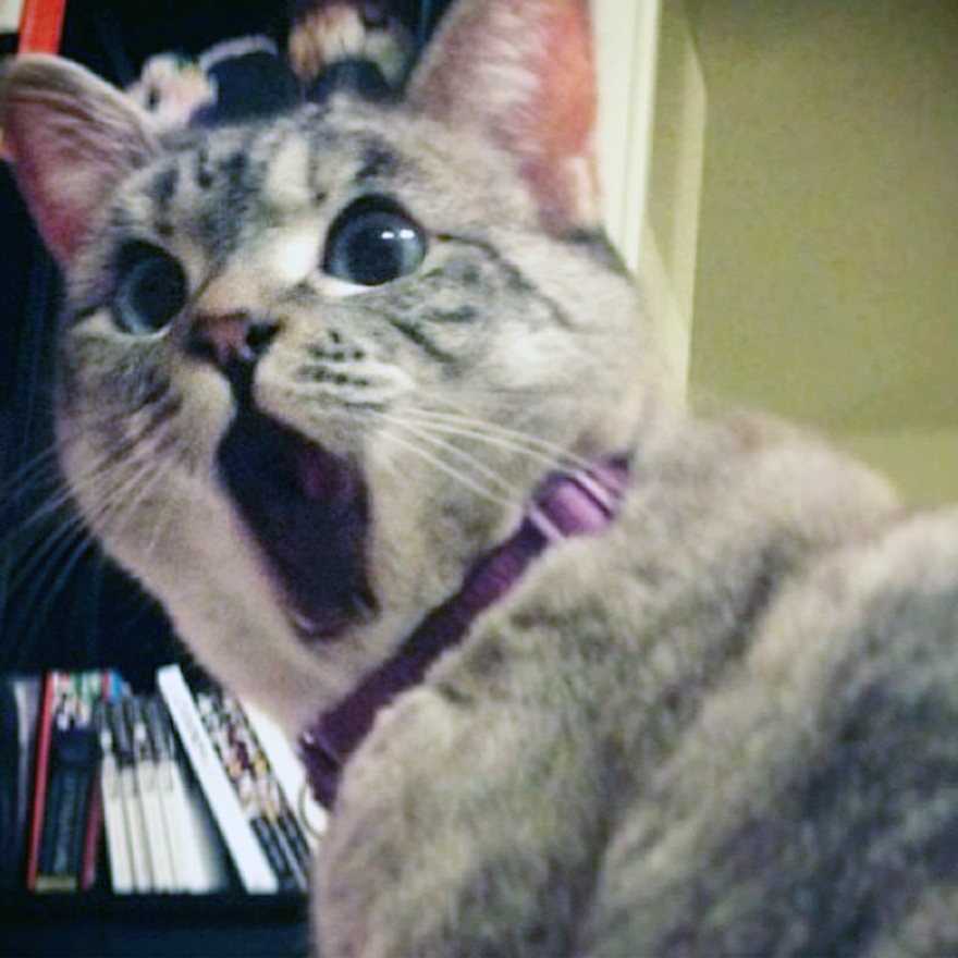 A List With Some Of The Most Famous Cats Of The Internet Viral - 10 famous cats internet