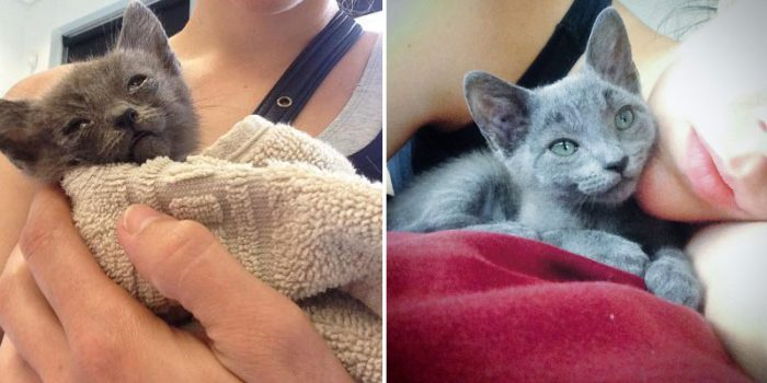 Women Went For A Jog And Found Dmitrius' The Stray Kitten