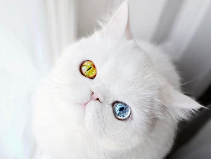 Meet The Kitty With Heterochromia Whose Eyes Will Hypnotize You