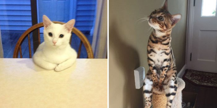 10 Funny Cats Caught Acting Really Weird