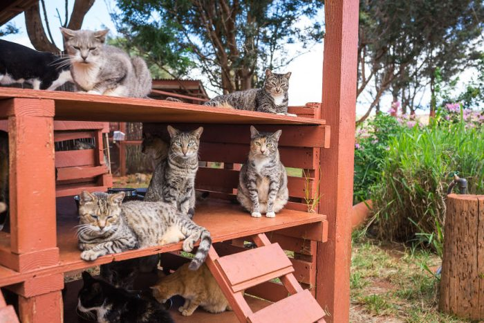 The Amazing Cat sanctuary On One Of Hawaii's Small Islands