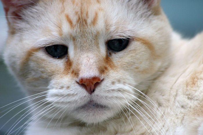 Adopt A Senior Cat This November – Adopt A Senior Pet Month