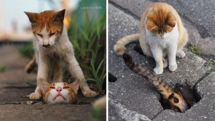 Stray Cats Having The Time Of Their Lives In The Drain Pipe Holes