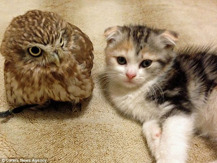 Kitten And Owl Become Best Friends And Nap Buddies