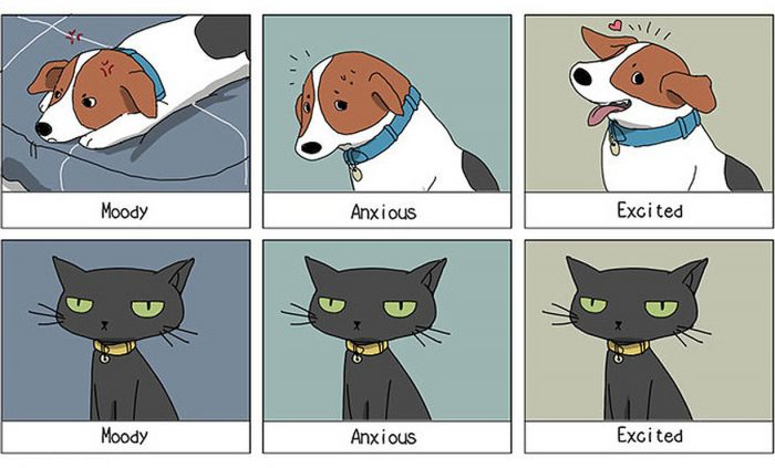 Funny comics illustrate the differences between cats and dogs – Part 1