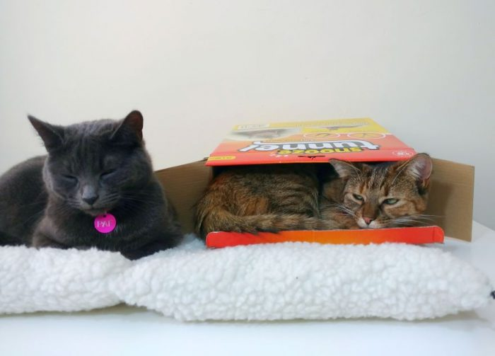 Facts About Cats' Sleeping Habits With Paf And Tika