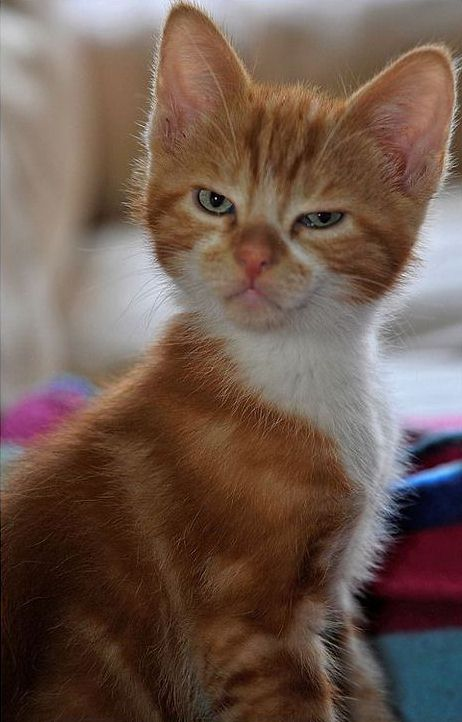 10 Kitties That You Don't Want To Mess With | Viral Cats Blog