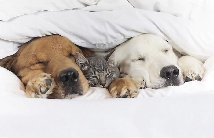 A Cat And Two Dogs – Friends That Love Napping