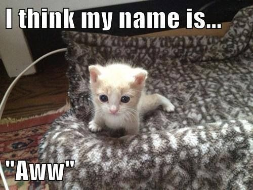 Top 100 Funny And Clever Cat Names Viral Cats Blog
