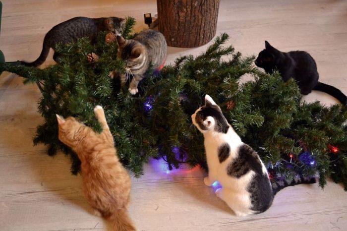 Cats Vs Christmas Trees.Cats Vs Christmas Trees Viral Cats Blog