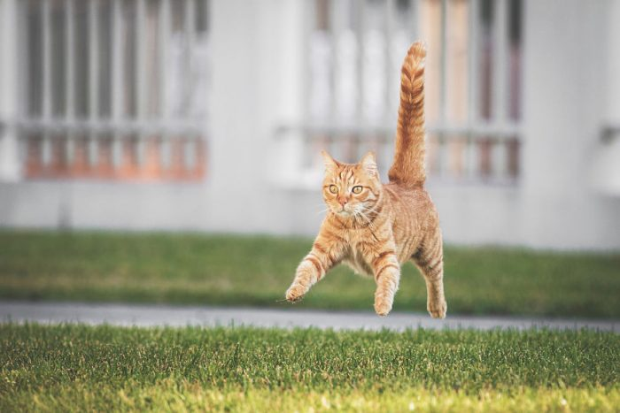 Photographer Takes Photos Of Her Cat In The Yard And His Postures Are Incredible!