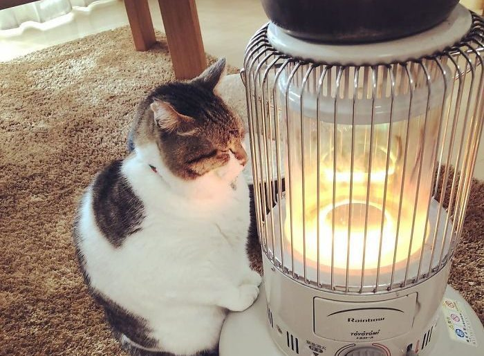 These Cute Photos Of Cat Falling In Love With A Heater Will Make Your Day