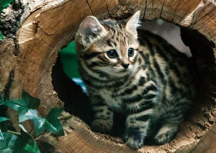 The World's Deadliest Cat Is The Cutest Kitty You've Ever Seen