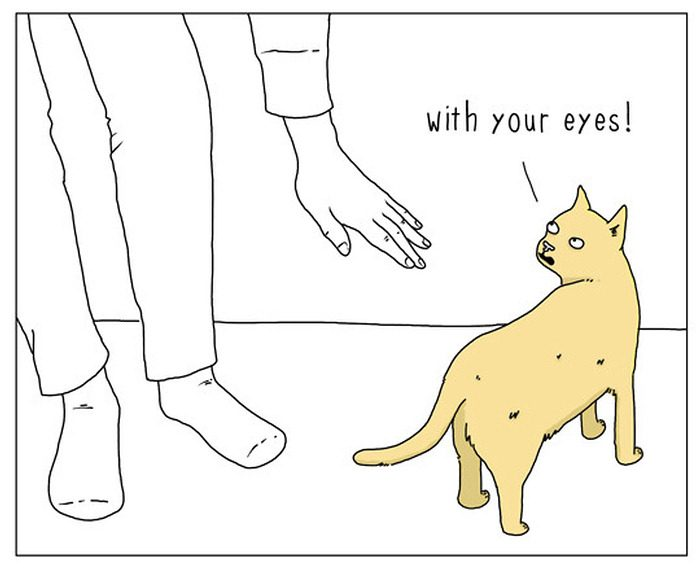 15 Amusing Differences Between Cats And Dogs