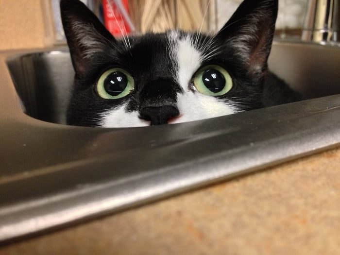 15 People Share Photos Of Their Cats Hiding From The Vet