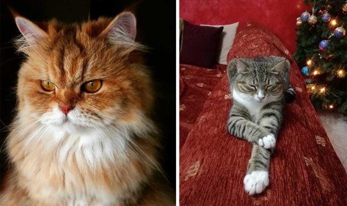 Best Cat Photos Sent To Us This Week (16 December 2018)
