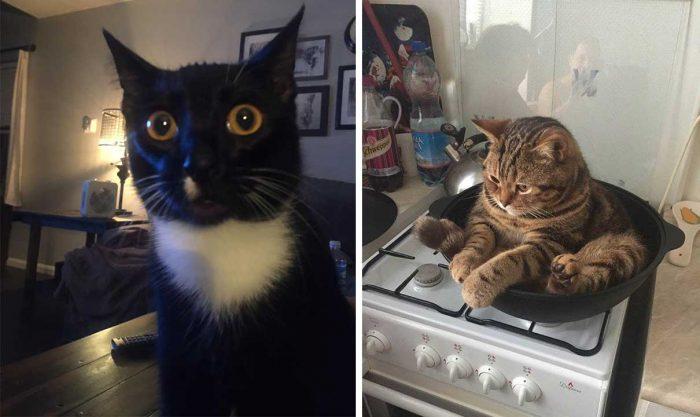 Best Cat Photos Sent To Us This Week (30 December 2018)