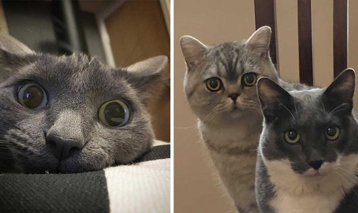Best Cat Photos Sent To Us This Week (21 April 2019)