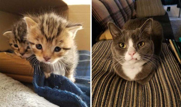 Best Cat Photos Sent To Us This Week (07 April 2019)