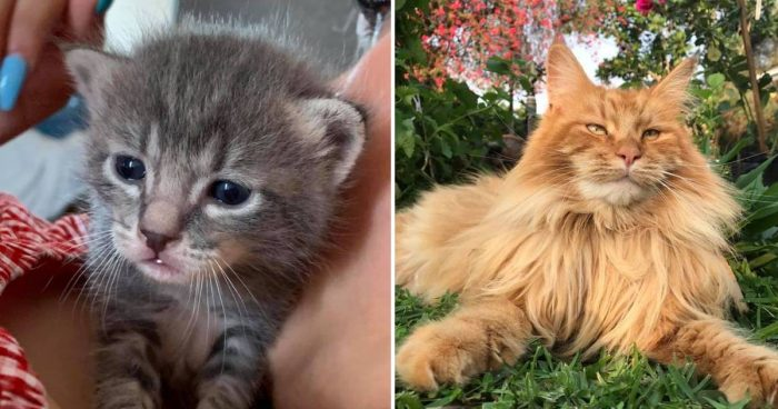 Best Cat Photos Sent To Us This Week (26 May 2019)