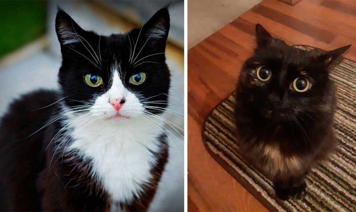 Best Cat Photos Sent To Us This Week (19 May 2019)