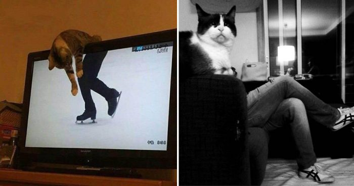 10 Purrfectly Timed Photos Of Cats