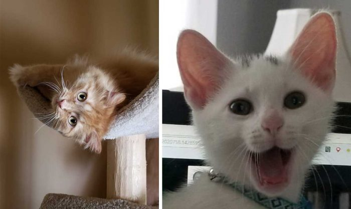Best Cat Photos Sent To Us This Week (30 June 2019)