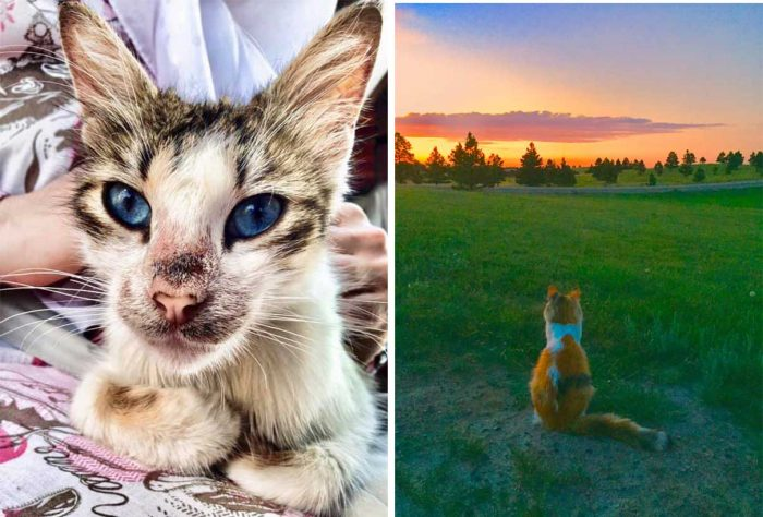 Best Cat Photos Sent To Us This Week (04 August 2019)
