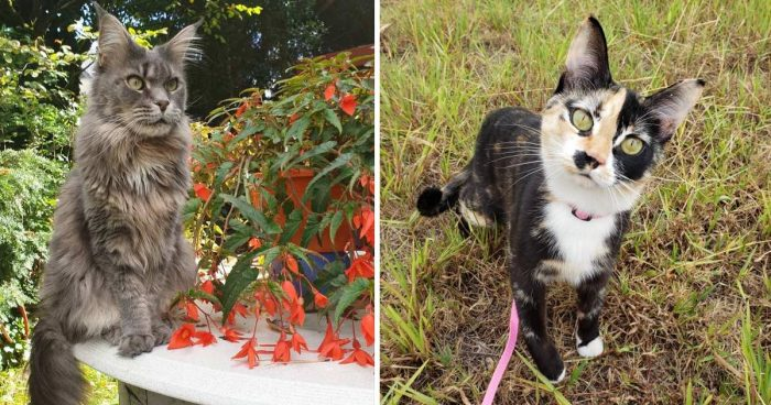 Best Cat Photos Sent To Us This Week (06 October 2019)