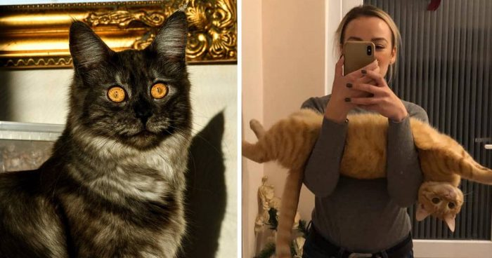 Best Cat Photos Sent To Us This Week (03 November 2019)